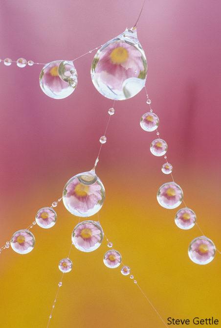 Dewdrops on a Spiderweb Nikon F4, 200mm macro, 8 seconds @ f22, ISO 100